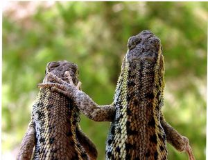 lizards codependency2 Codependency, Enabling Behavior, Tough Love