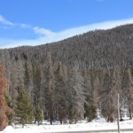 Rocky Mountain National Park 150x150 Death and Rebirth, Mountain Pine Beetle, Pesticides, Carcinogens, Cancer
