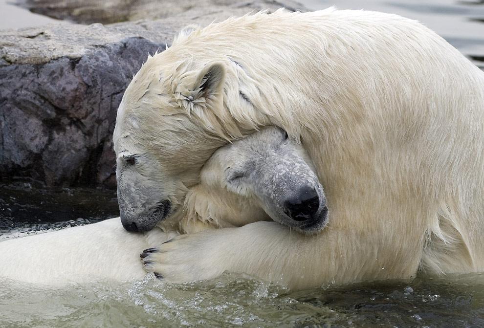 huge_Polar Bear Hug - Spiritual Growth, How To Be Happy - Seth David Chernoff – Manual ...