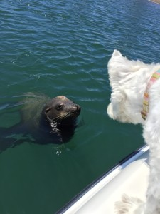 Bella Chernoff meet Sealion